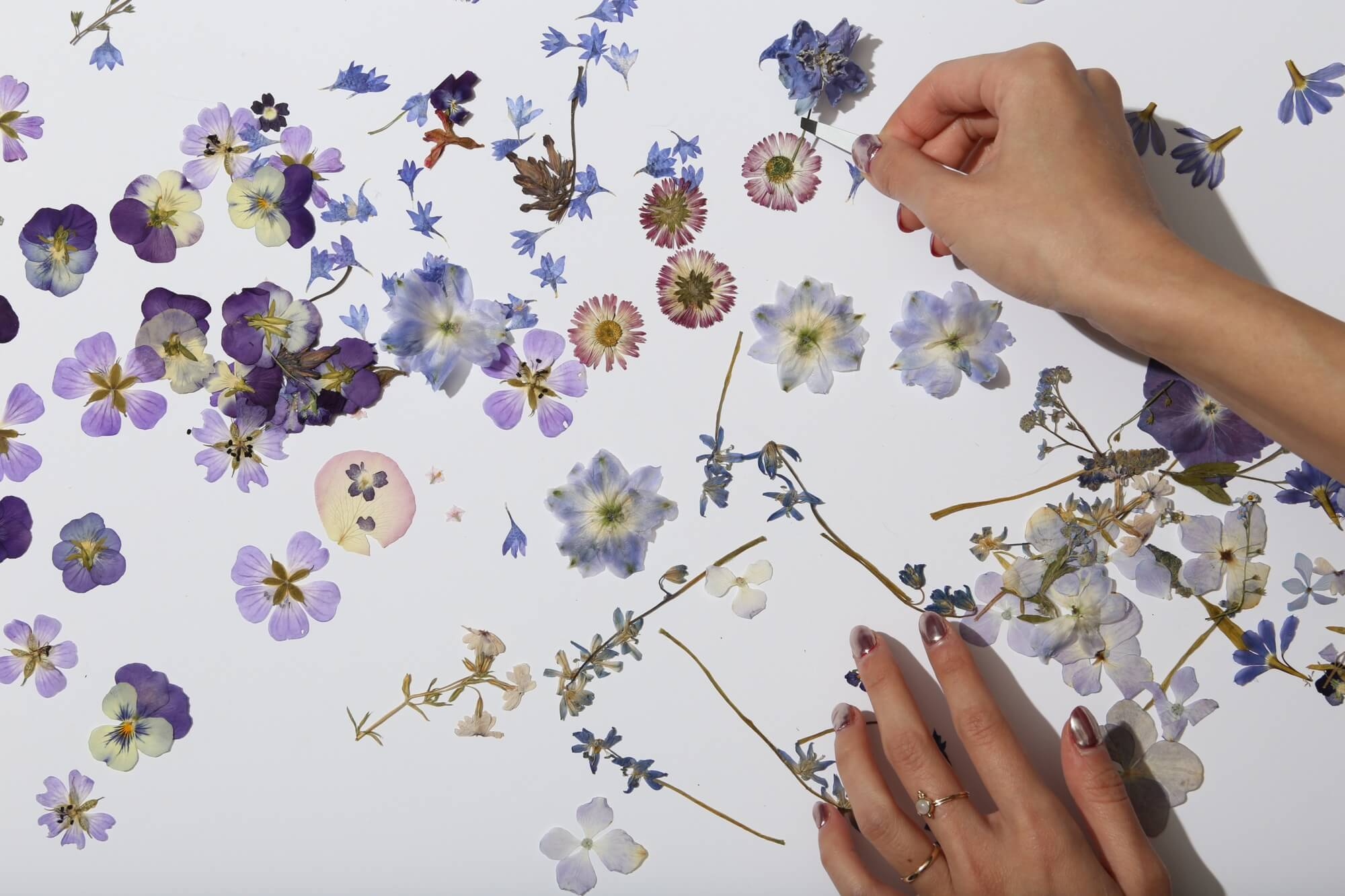 Pressed flowers tutorial