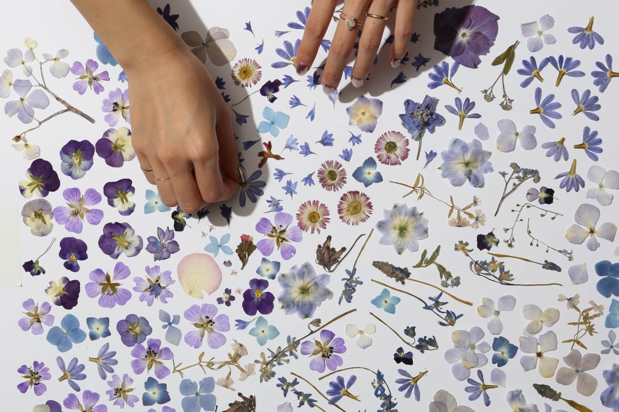 Pressed Flower Tips And Tricks From Our Studio Paperless Post Blog