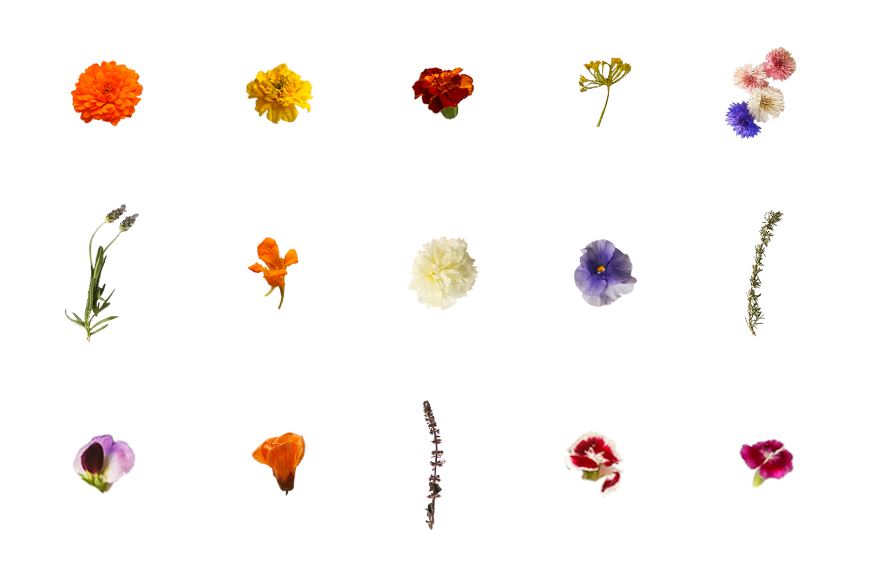 Edible flower glossary - Paperless Post